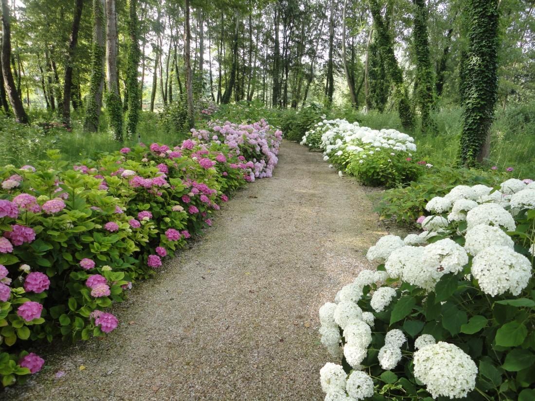 giardino a Forte dei Marmi 18