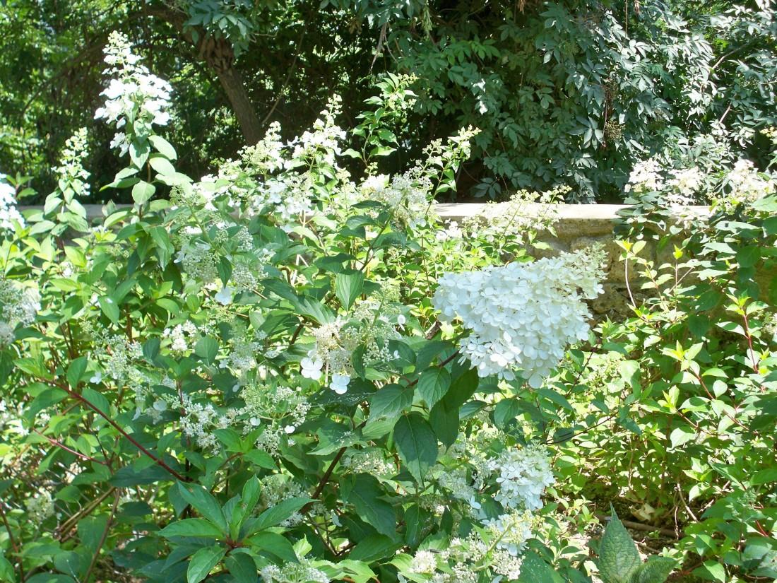 giardino a Pietrasanta 31